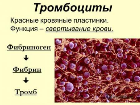 Показатели крови во втором триместре