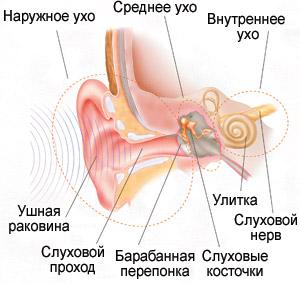 Физиология ушной раковины