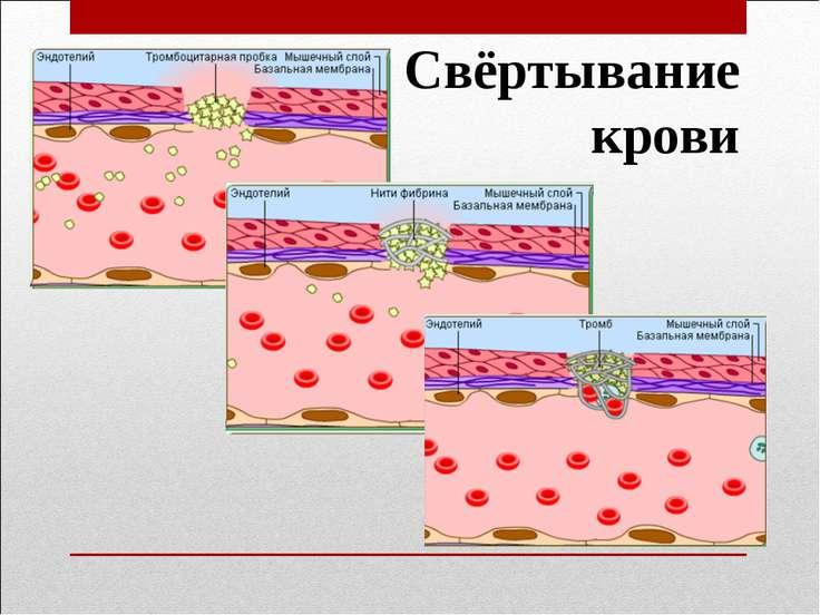 Значение гемостаза для организма