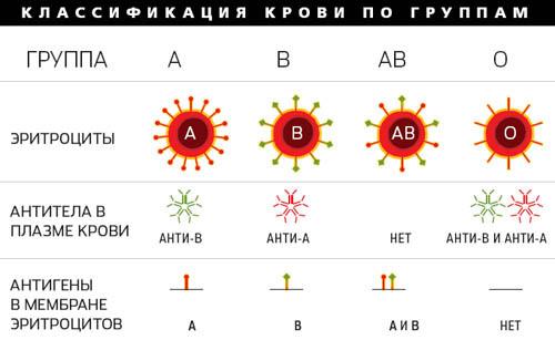 Почему четыре группы крови