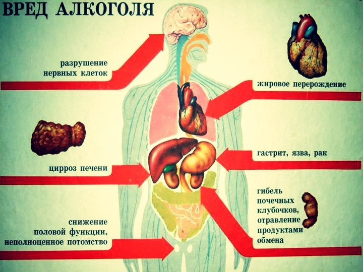 Путь спиртного по организму