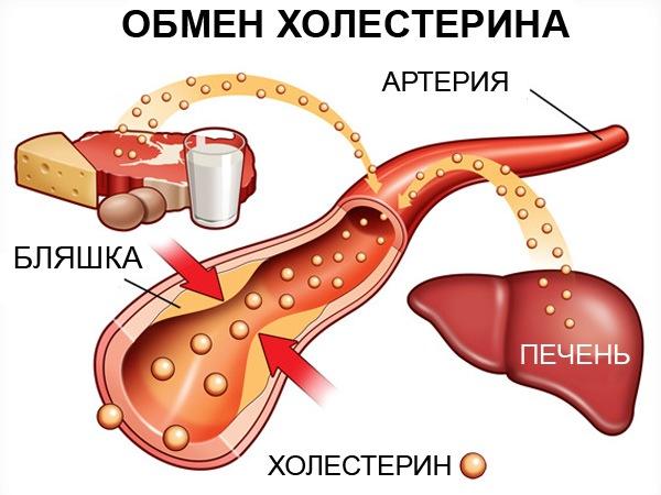 Основные функции холестерина