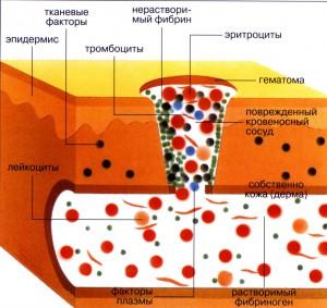 Физиология процесса