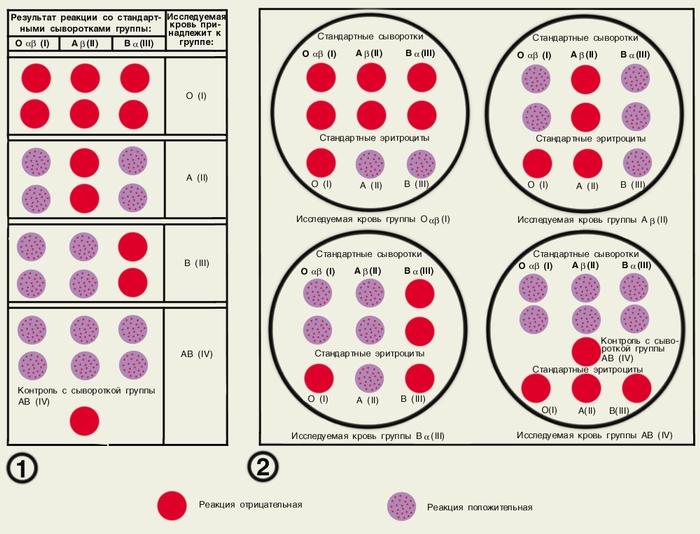 Разделение на группы крови