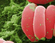 Способы повышения низкого гемоглобина