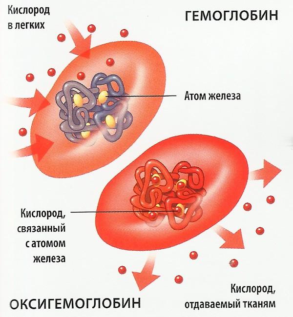 Оксигемоглобин и карбогемоглобин