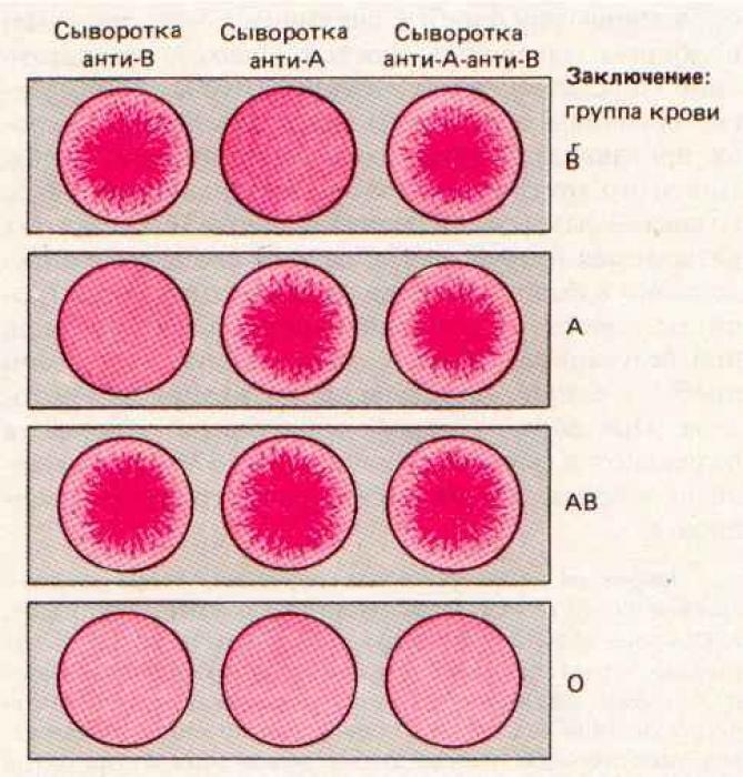 Как определить группу крови
