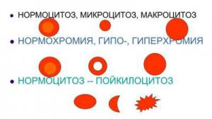 Что означает пойкилоцитоз