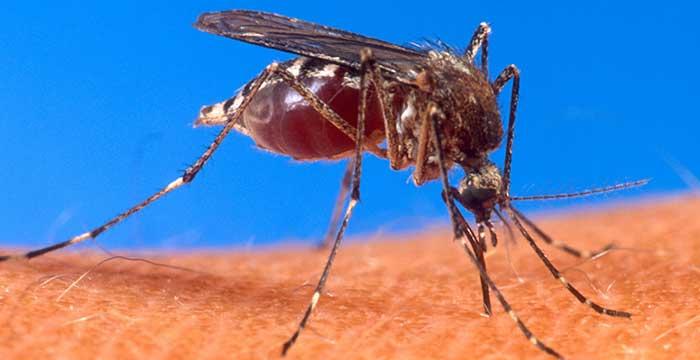 Почему кусают комары беременных