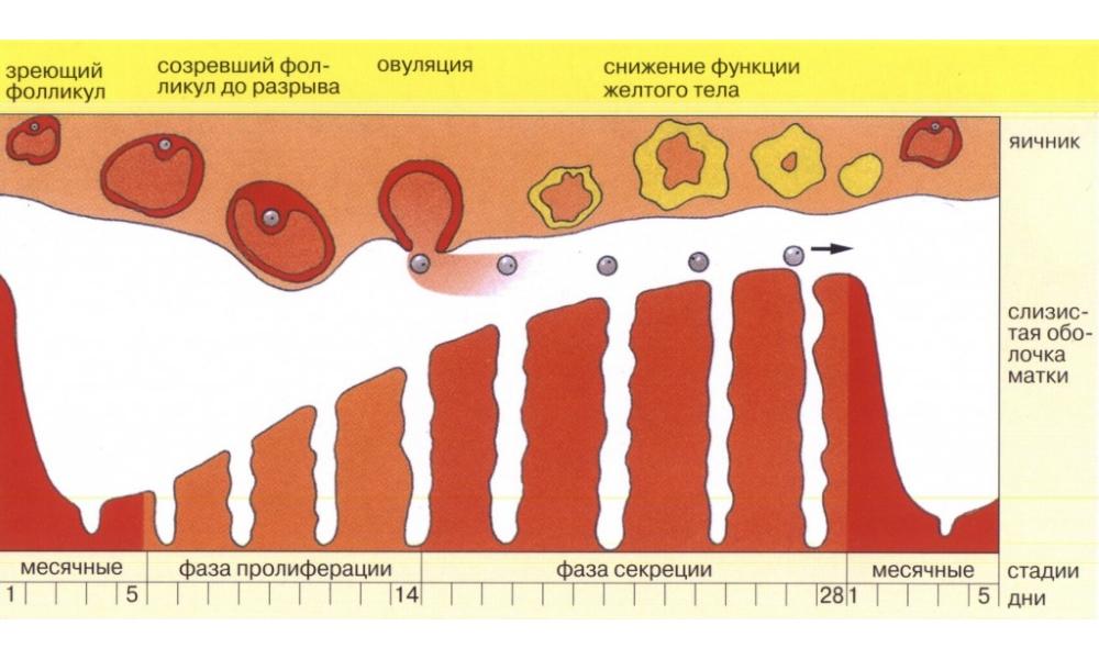 Особенности кровянистых выделений