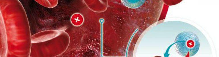 Положительные и отрицательные группы крови