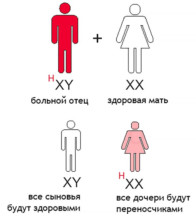 Цепочка наследования гена гемофилии