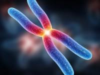 Опасность повышенных моноцитов в крови