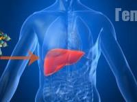 Исследование крови на гепатит С