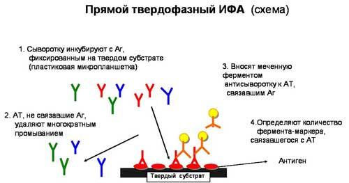 Методика проведения ИФА