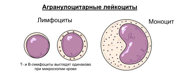 Содержание в крови