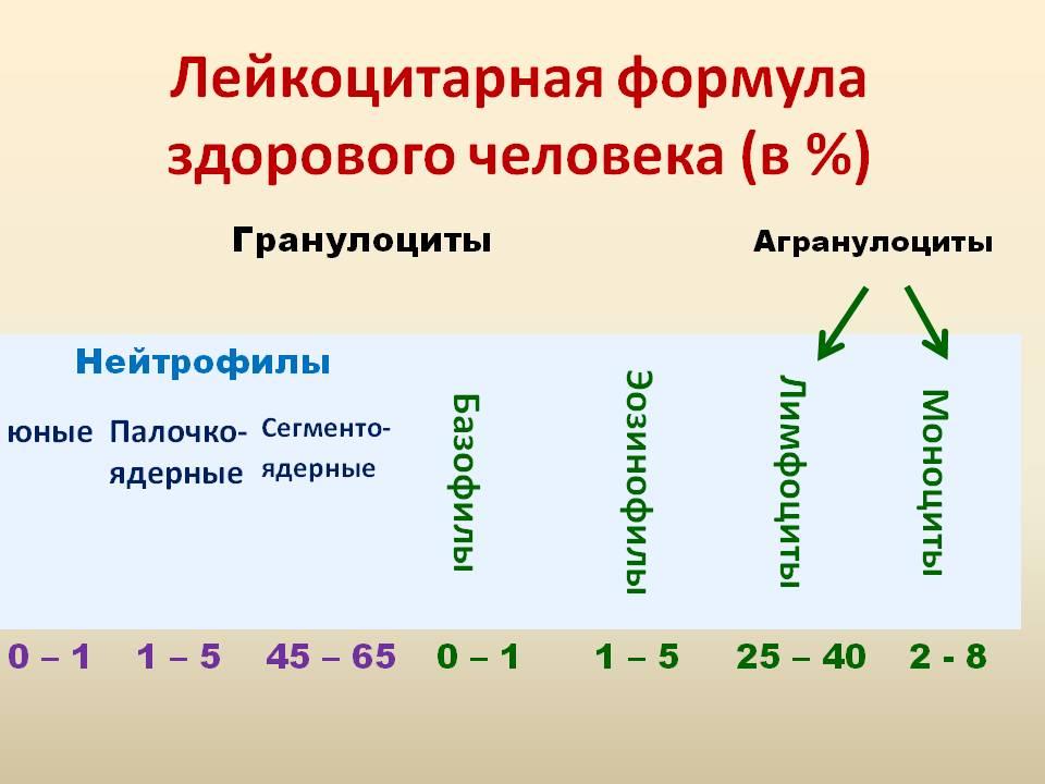 Показатели лейкоцитарной формулы