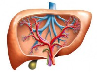 Повышенный уровень билирубина в крови