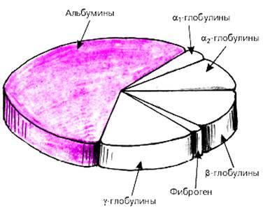 Состав белка