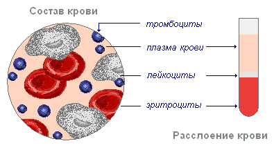 Основные составляющие крови