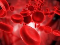 Какие группы крови существуют у человека