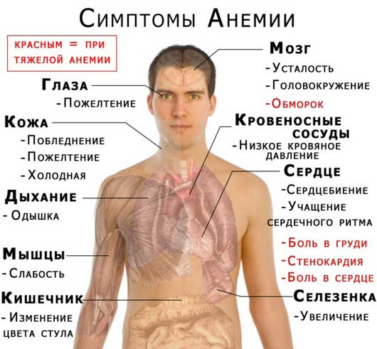 Какие бывают типы анемии