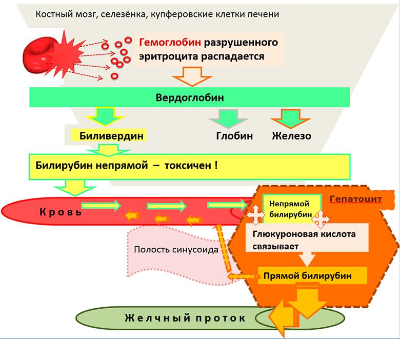 Типы билирубина
