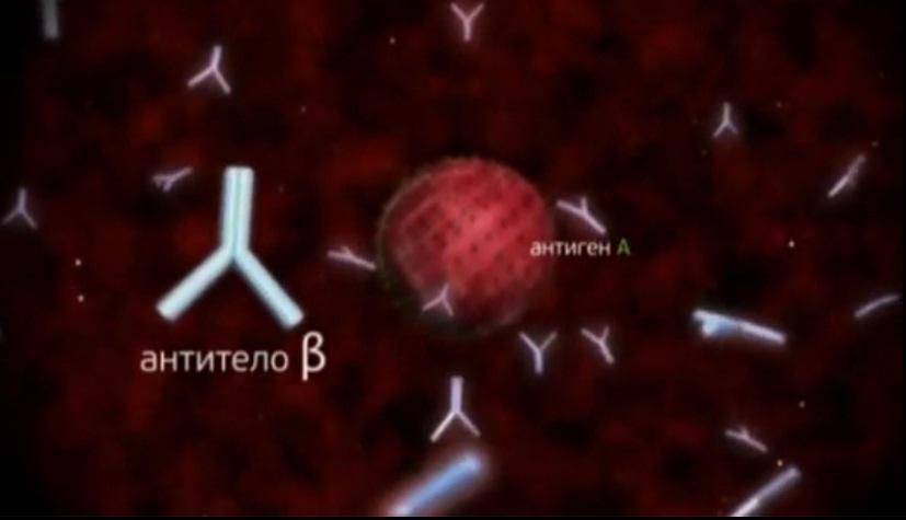 Как вырабатываются антитела