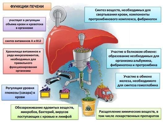 Состав протеинов
