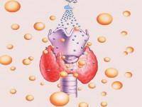 Исследование крови на гормоны ТТГ