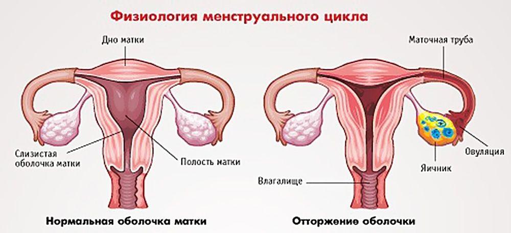 Репродуктивный период