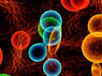 Что обозначает лейкоцитарная формула крови