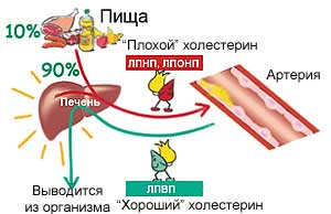Группы холестерина