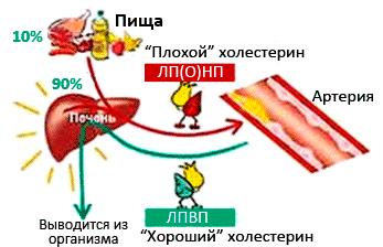 стресс высокий холестерин