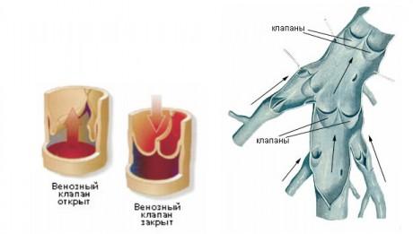 Факторы, приводящие к развитию заболевания