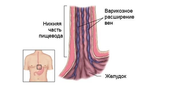 Принцип работы кровеносной системы