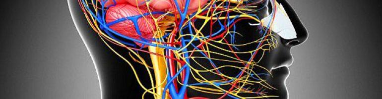 Атеросклероз БЦА (брахиоцефальных артерий)