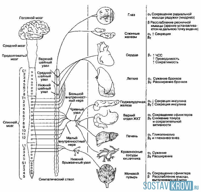 Характеристика рецепторов