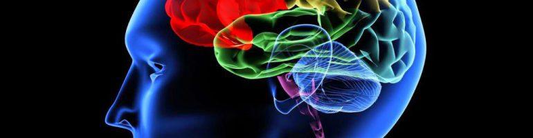 Киста в головном мозге