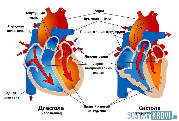 Систолическая дисфункция миокарда при сердечной недостаточности -