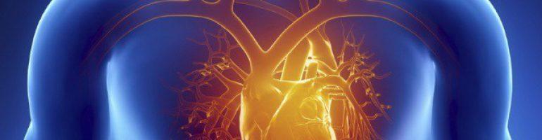 Анатомия границ сердца