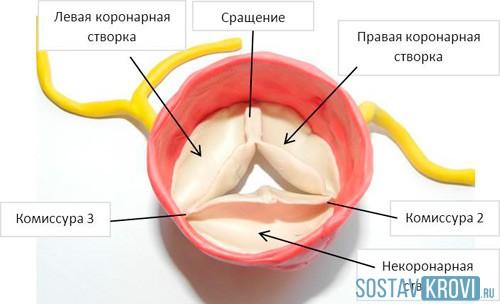 Аортального клапана