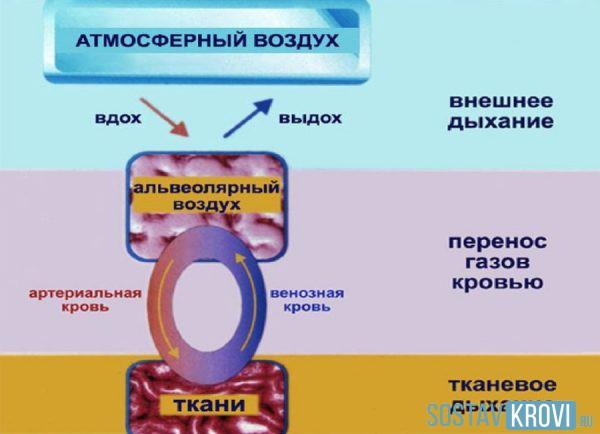 Симптомы и методы лечения гипоксемии