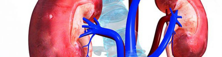 Что такое инфаркт почки