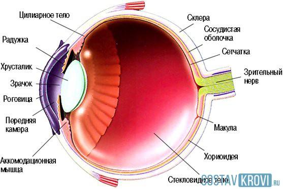 Где делают операции на сетчатке глаза